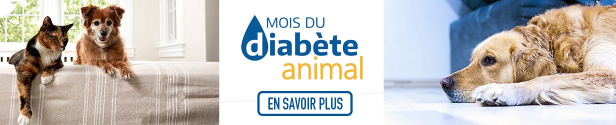 banniere-mois-diabete-chien