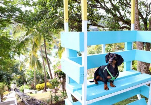crusoe-at-oasis-marigot-768x537