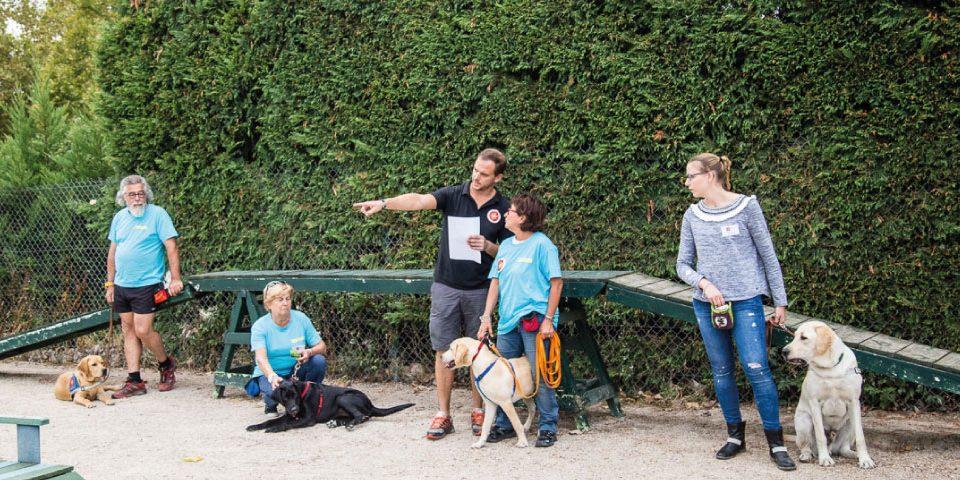 City Pattes: le blog urbain des amis des 4 pattes chiens