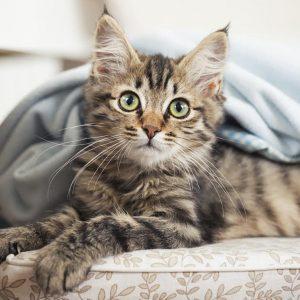 pourquoi les chats