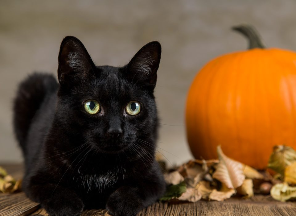 city-pattes-chat-noir-halloween-2