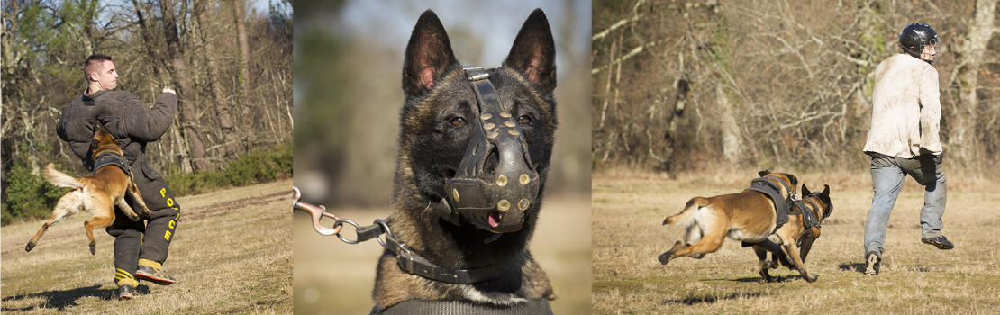 city-pattes-brigade-canine