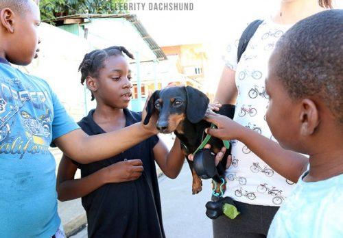 crusoe-dachshund-in-saint-lucia-768x535