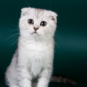 Pourquoi dit-on avoir un chat dans la gorge