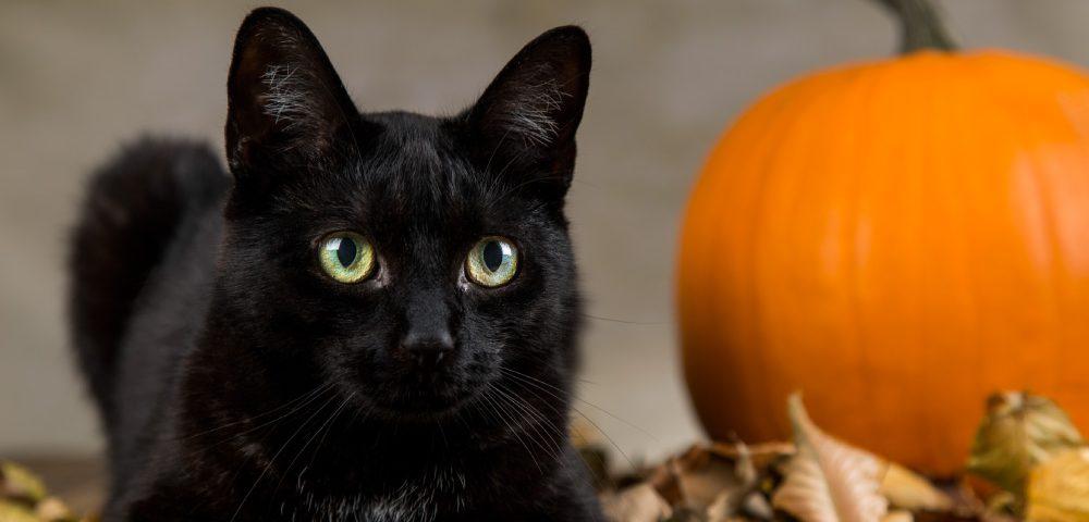 city-pattes-chat-noir-halloween-2