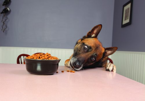 A dog stealing food from the counter