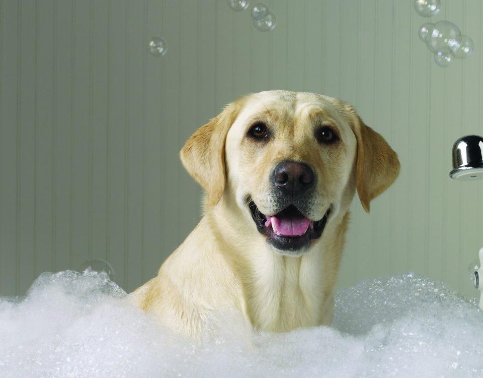 chien adoption chose savoir