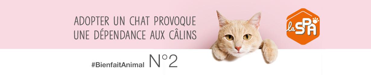 adoption_chat_bien_fait