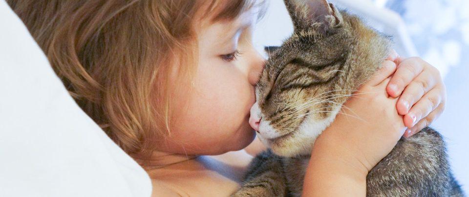 quizz-cat-lover