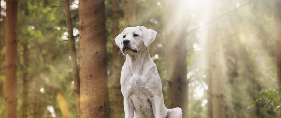 chien-assistance-judiciaire