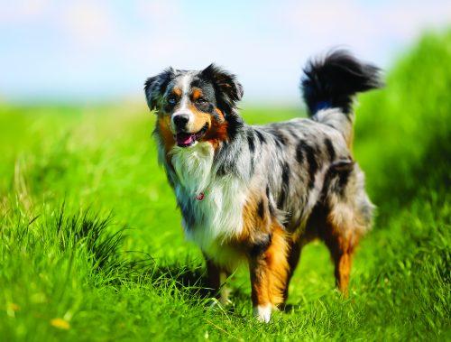 leishmaniose-chien-city-pattes