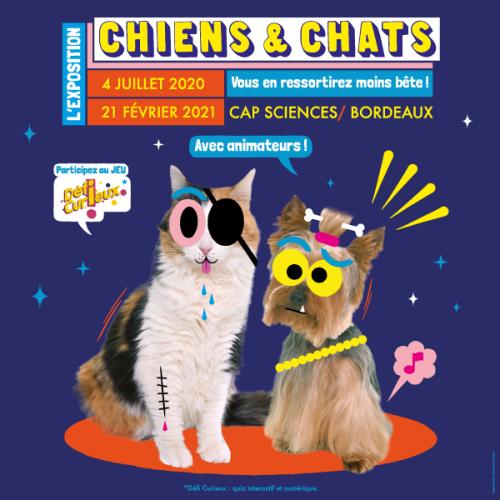 expo-chats-chiens-cap-sciences-city-pattes