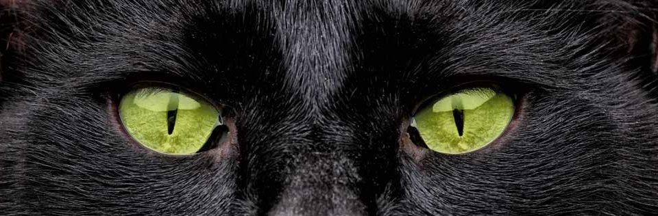 chat-noir-malediction-city-pattes
