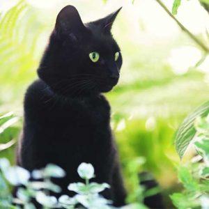 chat-noir-creature-satanique-city-pattes