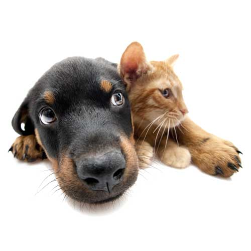 sterilisation-chienne-city-pattes