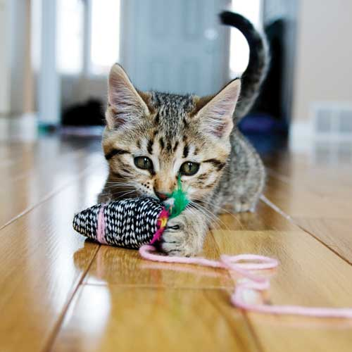 adoption-jouet-chaton-city-pattes