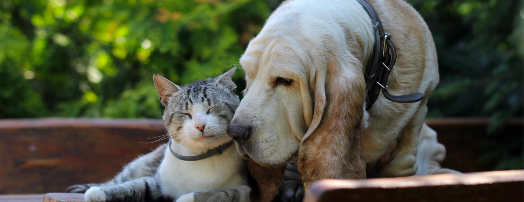 city_pattes_vaccination_chien-chat