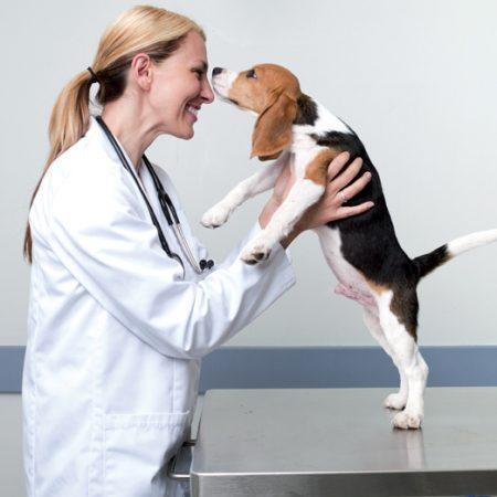 City_pattes_vaccination_animaux_de_compagnie